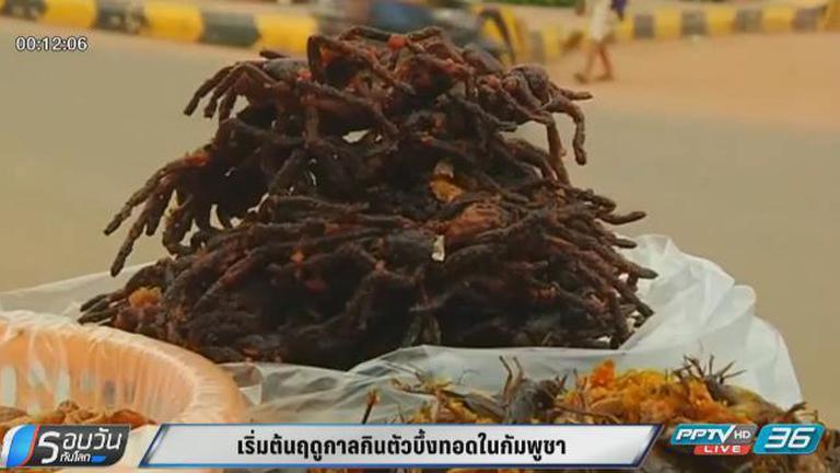 เริ่มต้นฤดูกาลกินแมงมุมยักษ์ทอดในกัมพูชา