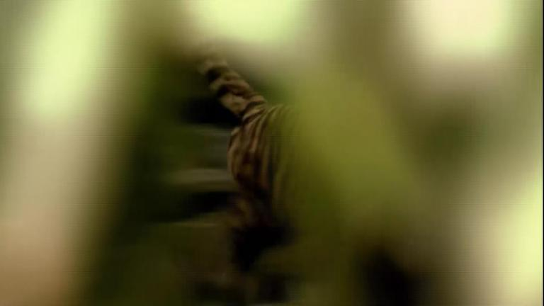 """ชั่วโมง Discovery ตอน แดนมรณะ """"เสือ"""""""