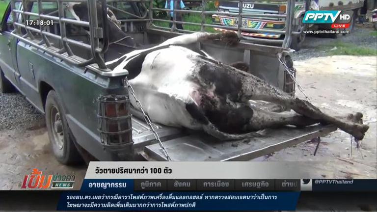 วัวตายปริศนา กว่า 100 ตัว ในพื้นที่ จ.ประจวบคีรีขันธ์