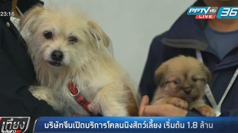 บริษัทจีนเปิดบริการโคลนนิงสัตว์เลี้ยง เริ่มต้น 1.8 ล้าน