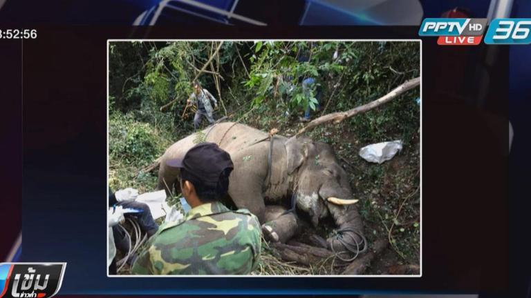 แกะรอยปืนฆ่าช้างป่ากุยบุรี รอผลตรวจรอยกระสุนเปรียบเทียบ
