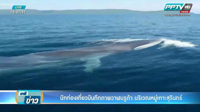 สุดฟิน! นักท่องเที่ยวไทย-เทศล่องเรือหมู่เกาะสุรินทร์เจอวาฬบรูด้า