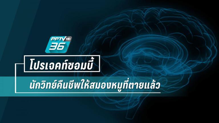 โปรเจคท์ซอมบี้  นักวิทย์คืนชีพให้สมองหมูที่ตายแล้ว