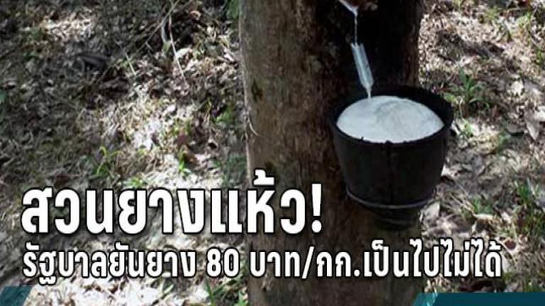 สวนยางแห้ว! รัฐบาลยันยาง 80 บาท/กก.เป็นไปไม่ได้