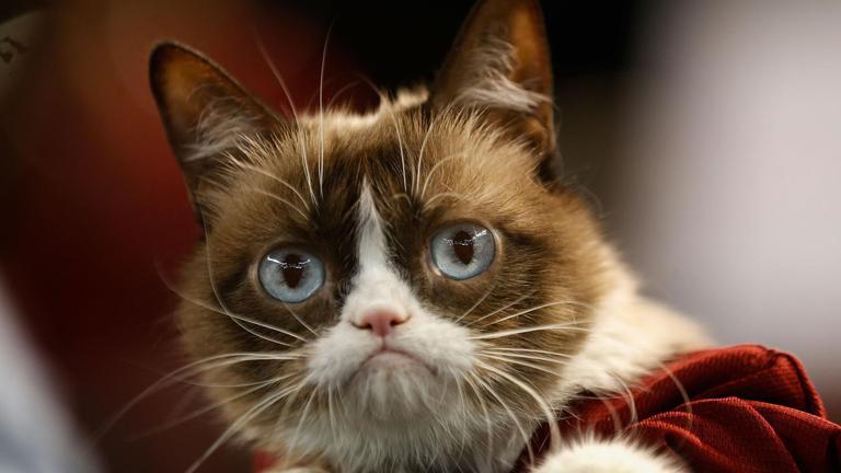 """""""กรัมปี้ แคท"""" แมวหน้าบึ้งขวัญใจชาวเน็ตตายแล้ว"""