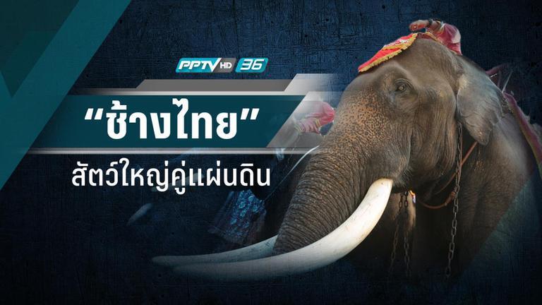 """4 ยุค """"ช้างไทย"""" สัตว์ใหญ่คู่แผ่นดินจากขุนศึกสู่ช้างโชว์"""