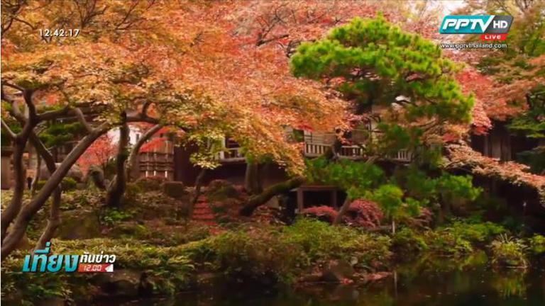 ชมใบไม้เปลี่ยนสีที่กรุงโตเกียว