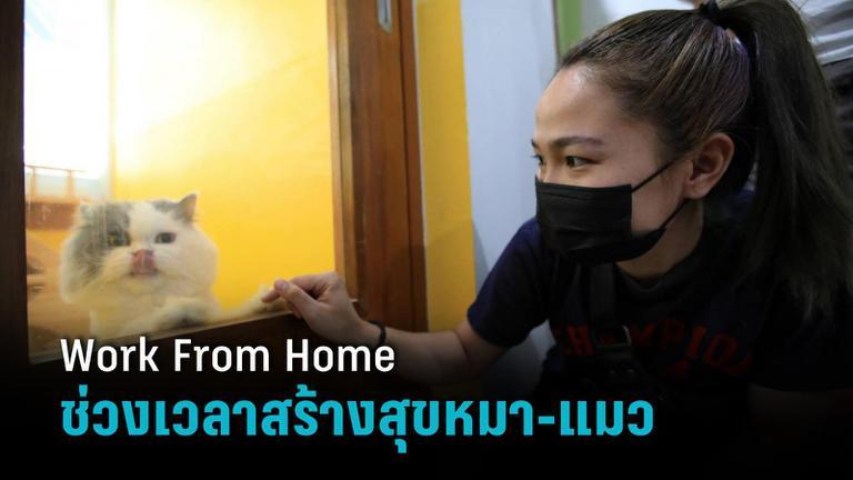 สัตวแพทย์ชี้ช่วงเจ้าของ Work From Home สุนัข-แมวแฮปปี้