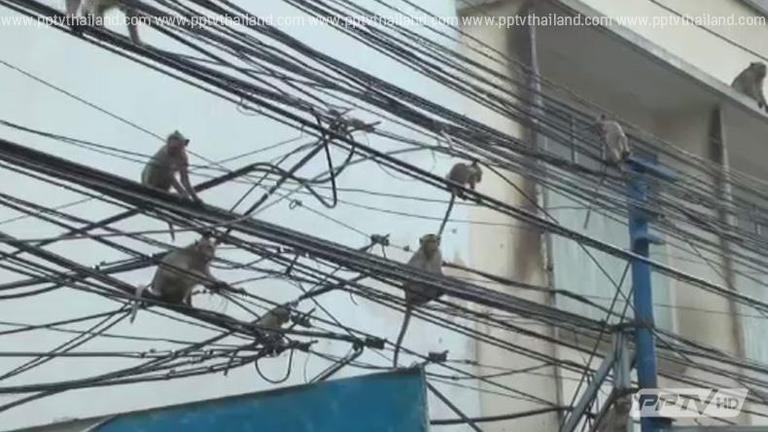 ชาวเมืองเพชรวอนรัฐแก้ปัญหาลิงรบกวน