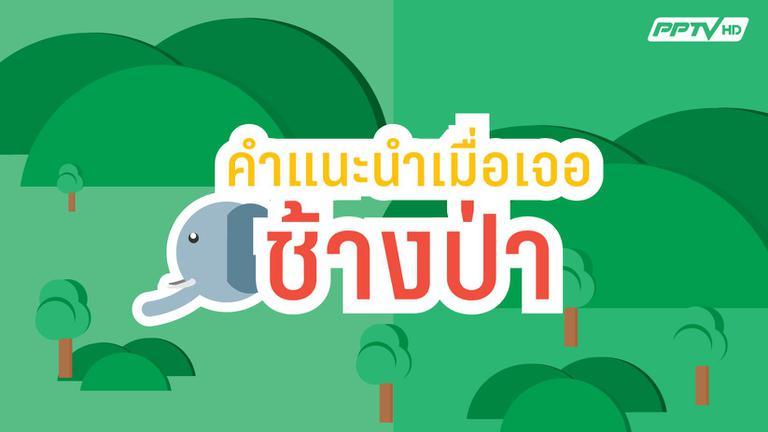 ข้อแนะนำเมื่อเผชิญหน้าช้างป่า