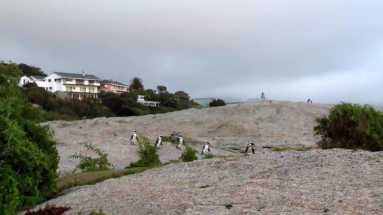 ชั่วโมง Discovery ตอน มหศัจรรย์แดนเพนกวิน ตอนที่ 4