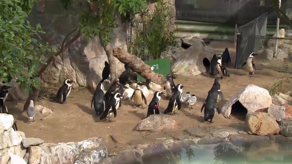 ชั่วโมง Discovery ตอน มหศัจรรย์แดนเพนกวิน ตอนที่ 2