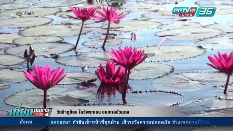 สุขทั่วไทย ตอน พาเที่ยวทะเลดอกบัวแดง จ.อุดรธานี