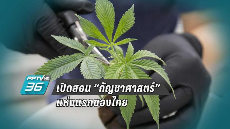 """เปิดสอน """"กัญชาศาสตร์"""" แห่งแรกของไทย"""