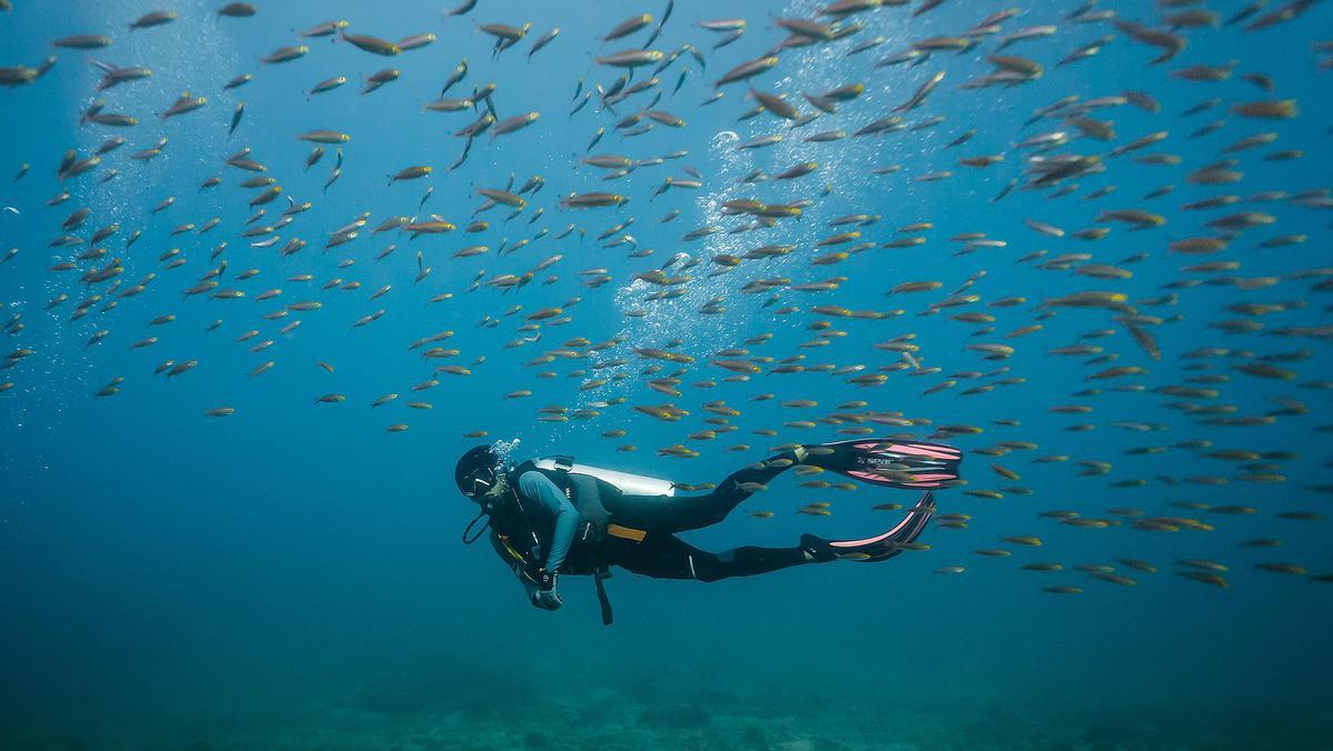 สัมผัสโลกใต้ทะเลครั้งแรกผ่านสองตาตัวเอง