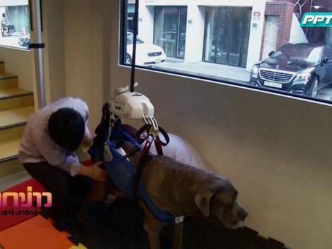 ถกข่าว เสาร์-อาทิตย์ : โรงเรียนสอนสุนัขเกาหลีใต้