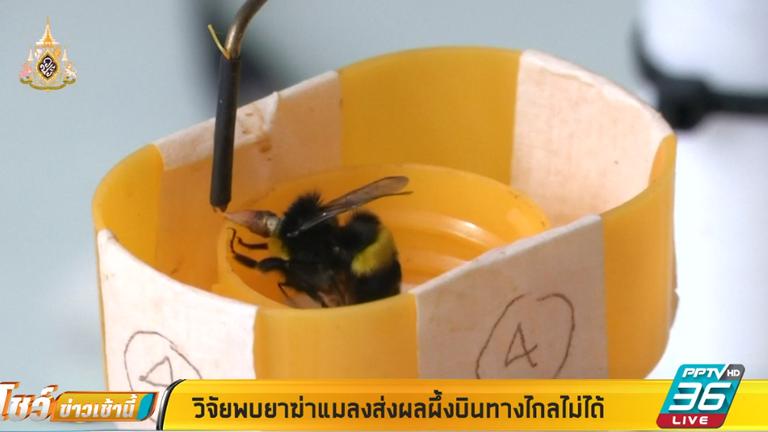 วิจัยพบยาฆ่าแมลงส่งผลทำให้ผึ้งบินทางไกลไม่ได้