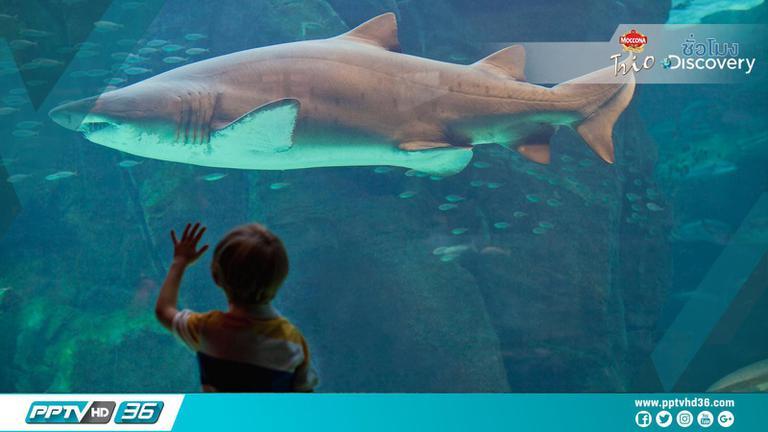 """5 เรื่อง น่าทึ่ง! เกี่ยวกับ """"ปลาฉลาม"""""""