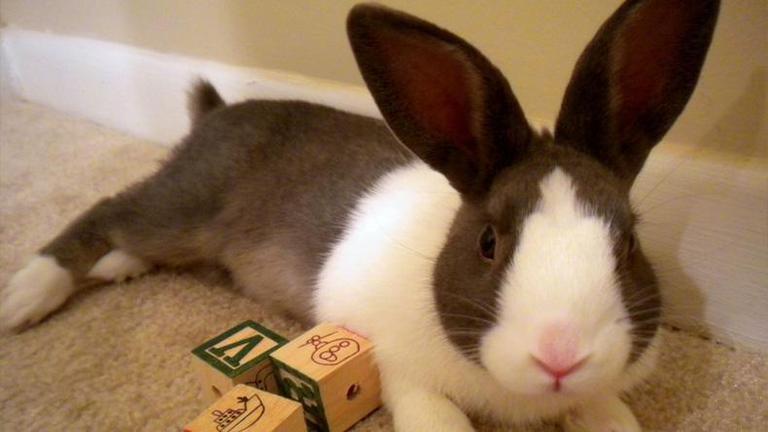 สหรัฐฯ คิดแปลก เปิดบริการจัดหาคู่ให้กระต่าย