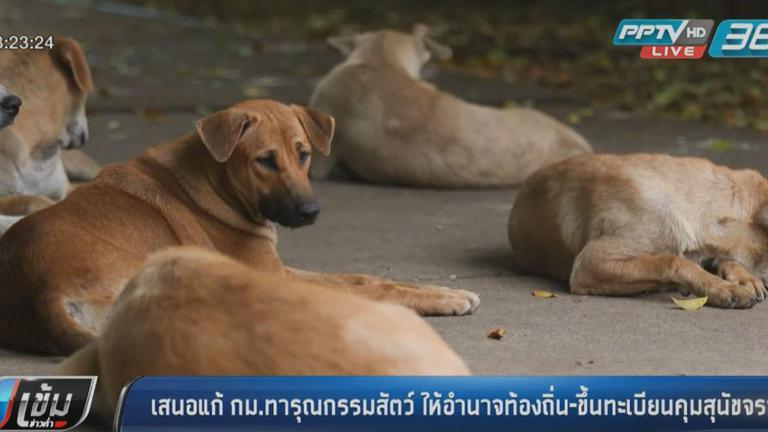 เสนอแก้กม.ทารุณกรรมสัตว์ ให้อำนาจท้องถิ่น-ขึ้นทะเบียนคุมสุนัขจรจัด