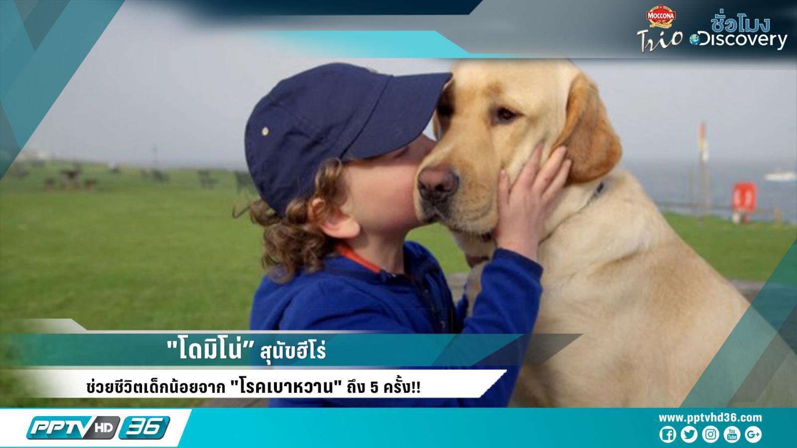 """""""โดมิโน่"""" สุนัขฮีโร่ ที่ช่วยชีวิตเด็กน้อยจาก """"โรคเบาหวาน"""" ถึง 5 ครั้ง!!"""