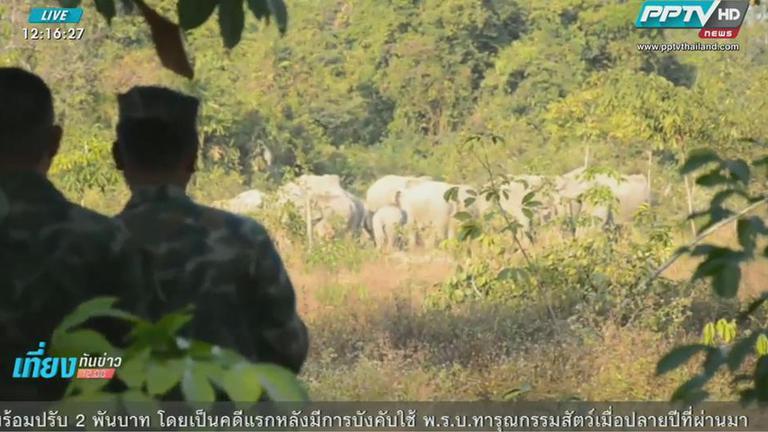 ชาวบ้านแก่งหางแมว จันทบุรีเดือดร้อนช้างป่า 70 ตัวลงมาหากินใกล้ชุมชน