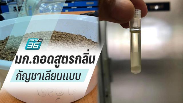 """นักวิทยาศาสตร์ไทยถอดสูตรกลิ่นเลียนแบบ """"กัญชา"""" ใช้อุตสาหกรรมอาหาร"""