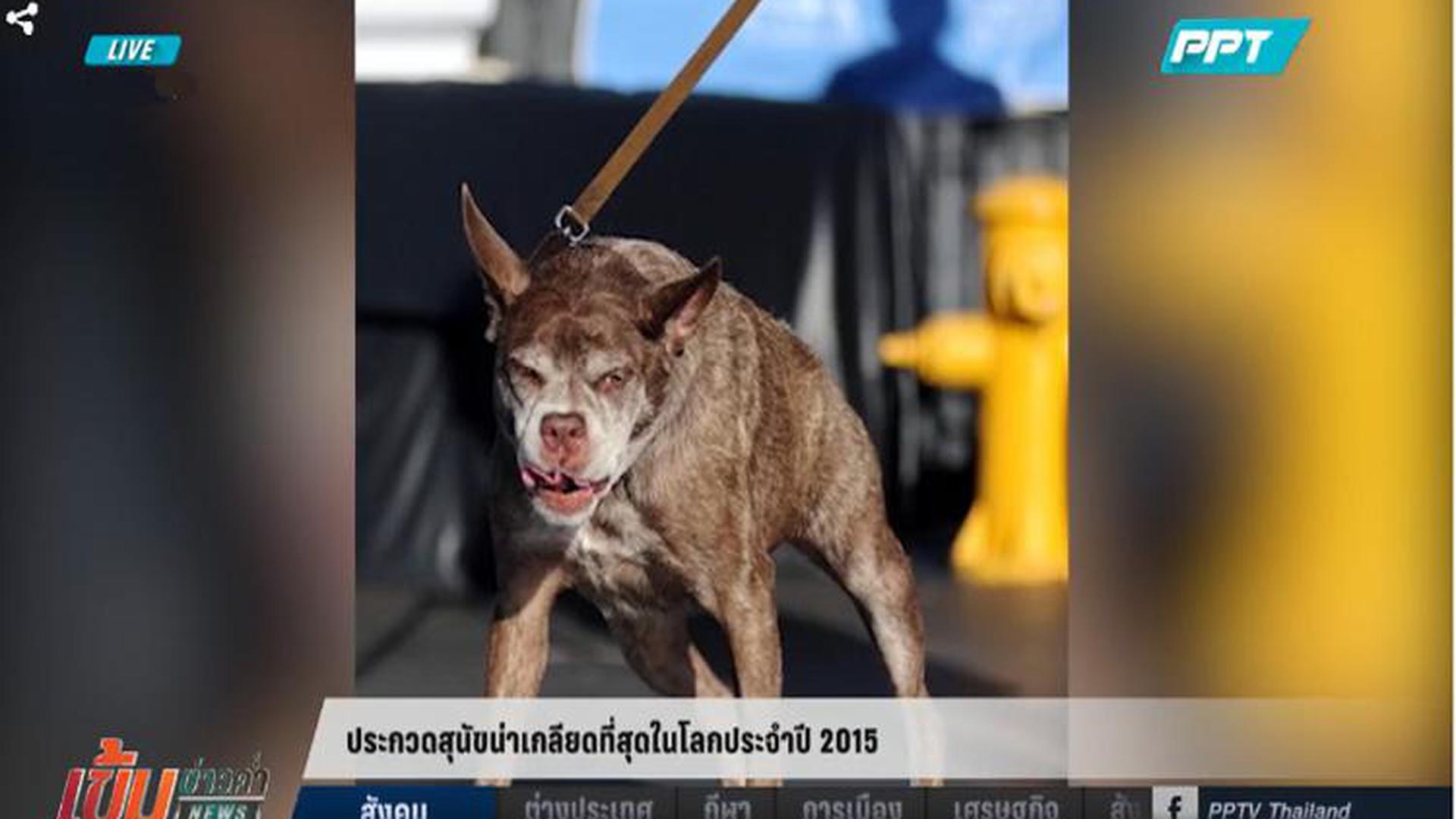 เจ้าตูบพันธุ์ทางพิการหลังค่อม คว้าแชมป์ประกวดสุนัขน่าเกลียดที่สุดในโลก