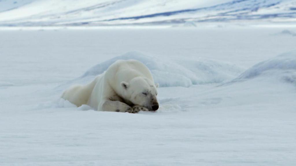 """ชั่วโมง Discovery ตอน ประชิดนักล่า """"หมีใหญ่แห่งขั้วโลก"""""""