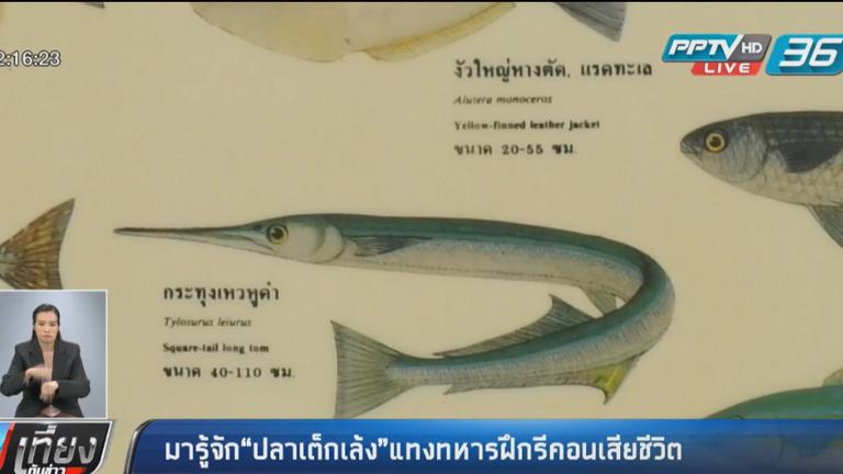 """รู้จักปลา """"เต็กเล้ง""""   ปลาพิฆาตแทงคอรีคอน  ว่ายน้ำเร็ว 90 กม./ ชั่วโมง"""