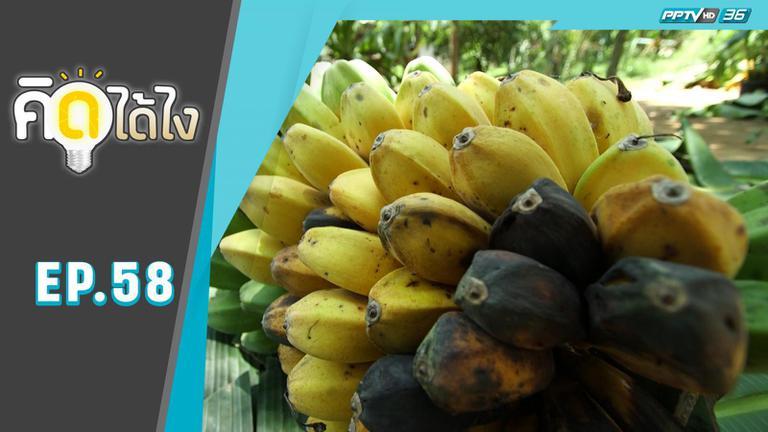 จากนักสะสมสู่นักธุรกิจเพาะพันธุ์กล้วยจำหน่าย