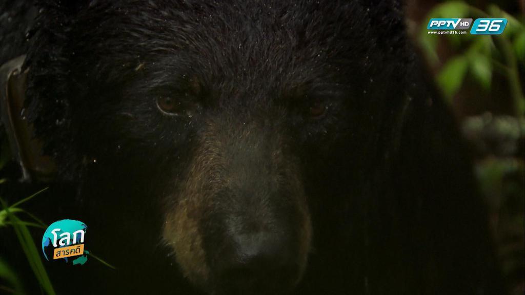 ครอบครัวหมี ลิลลี่และโฮป ตอนที่ 2