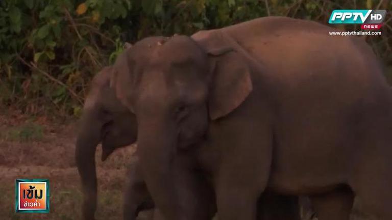 """""""กุยบุรีโมเดล"""" แก้ปัญหาคนกับช้างป่า"""