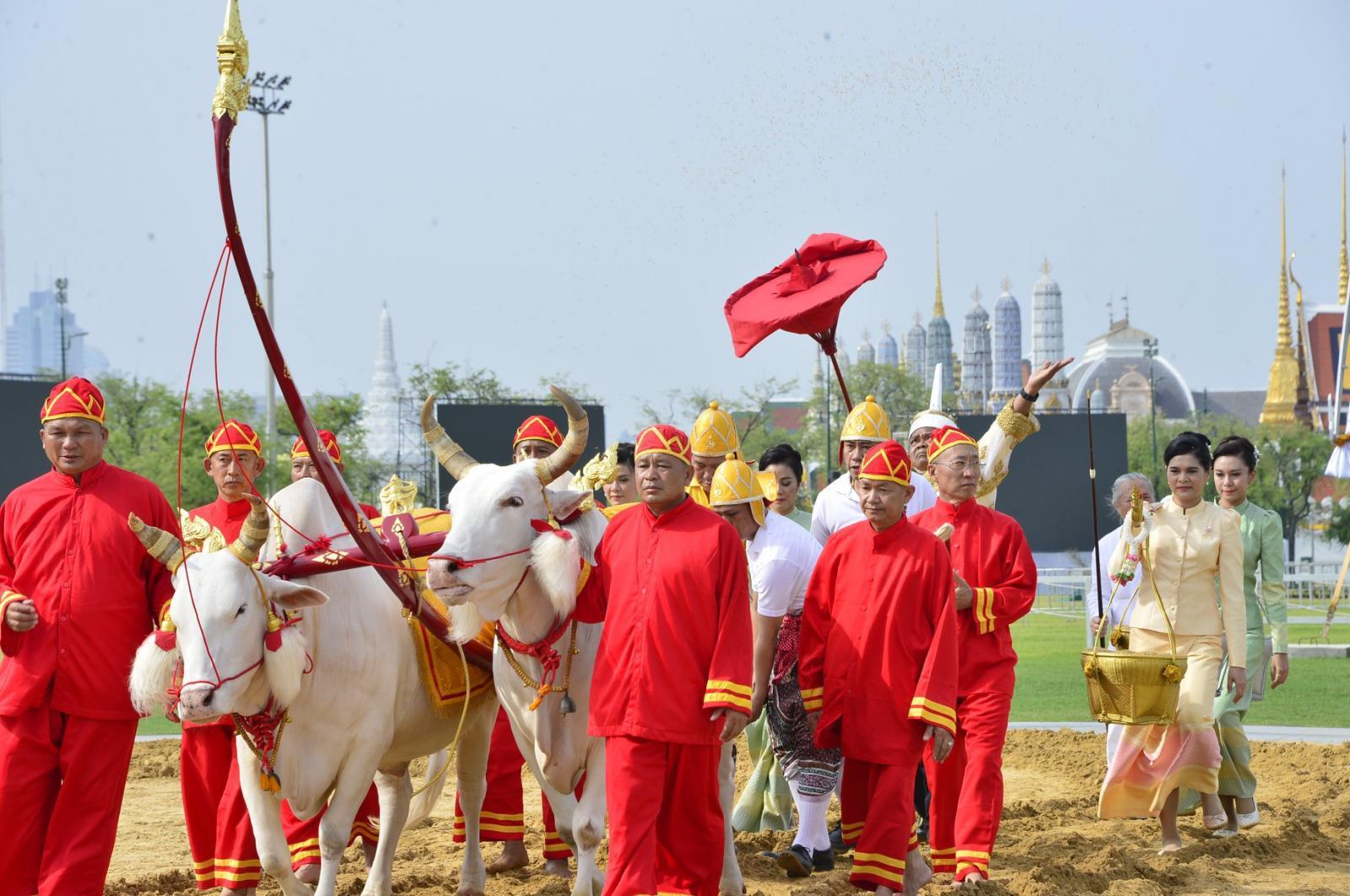 กระทรวงเกษตรฯ ซ้อมใหญ่พระราชพิธีพืชมงคลจรดพระนังคัลแรกนาขวัญ 2562 ณ มณฑลพิธีท้องสนามหลวง