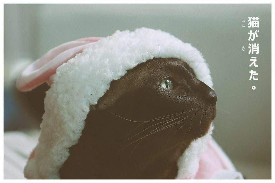 จอนนี่ แมวศุภลักษณ์
