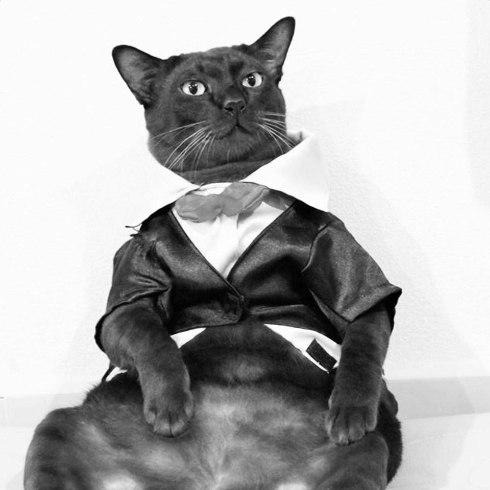 """ทาสแมวเศร้า """"จอนนี่แมวศุภลักษณ์"""" ตาย"""