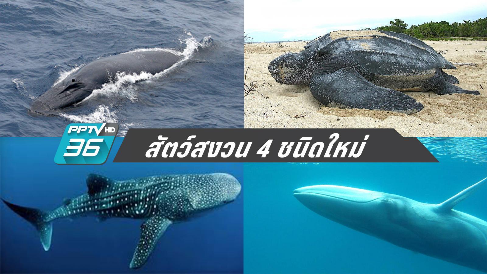"""""""วาฬบรูด้า – วาฬโอมูระ – เต่ามะเฟือง – ฉลามวาฬ"""" ขึ้นชั้นสัตว์สงวน"""