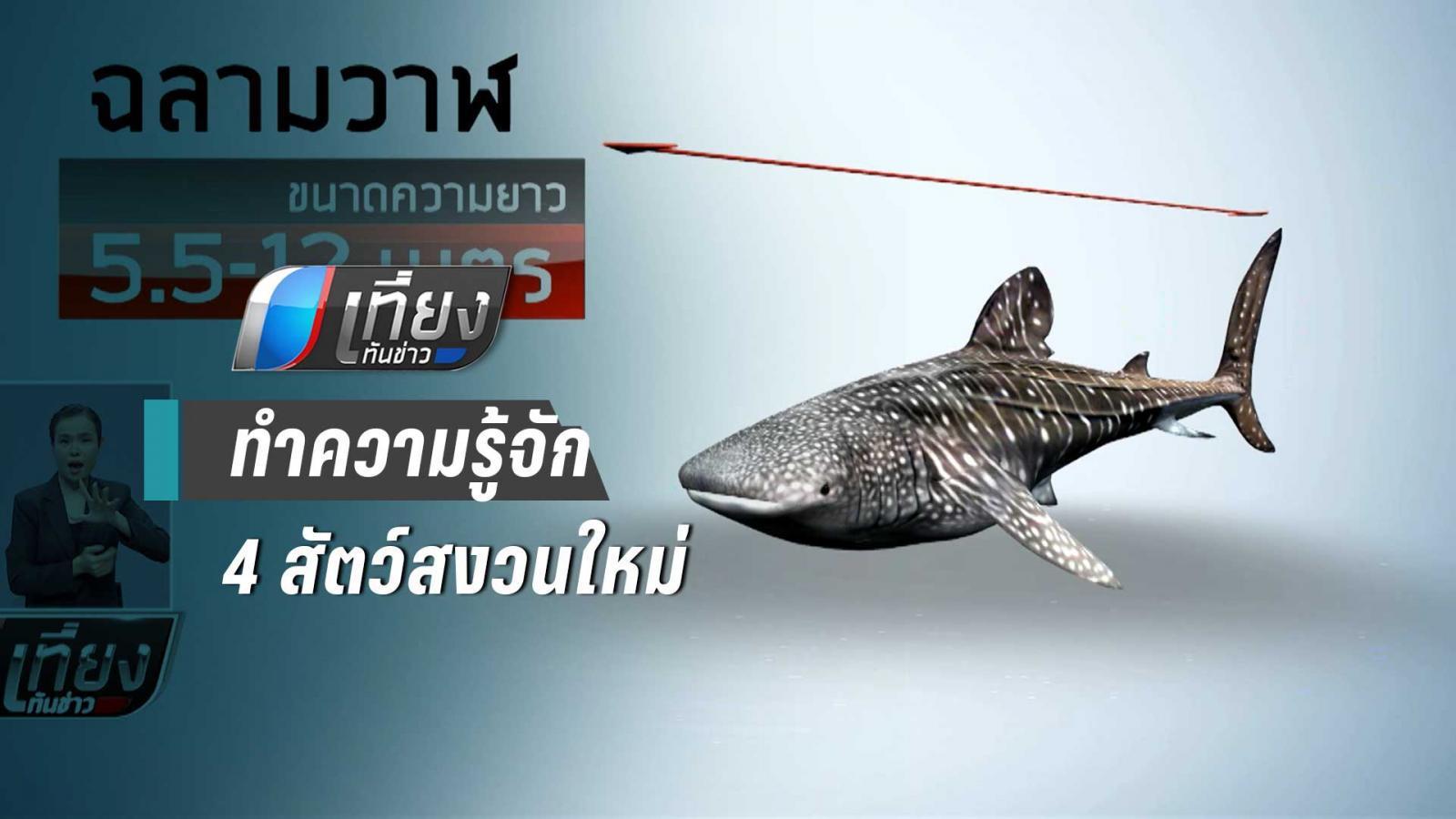 ทำความรู้จัก สัตว์ทะเล 4 ชนิดขึ้นทะเบียบสัตว์สงวน