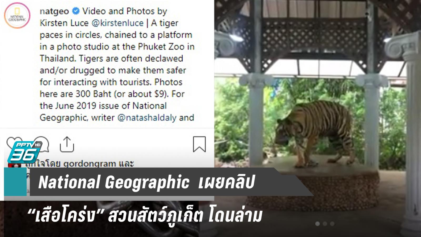 """ช่องสารคดีดัง เปิดคลิป """"เสือโคร่ง"""" สวนสัตว์ภูเก็ตโดนล่ามเพื่อถ่ายรูป"""