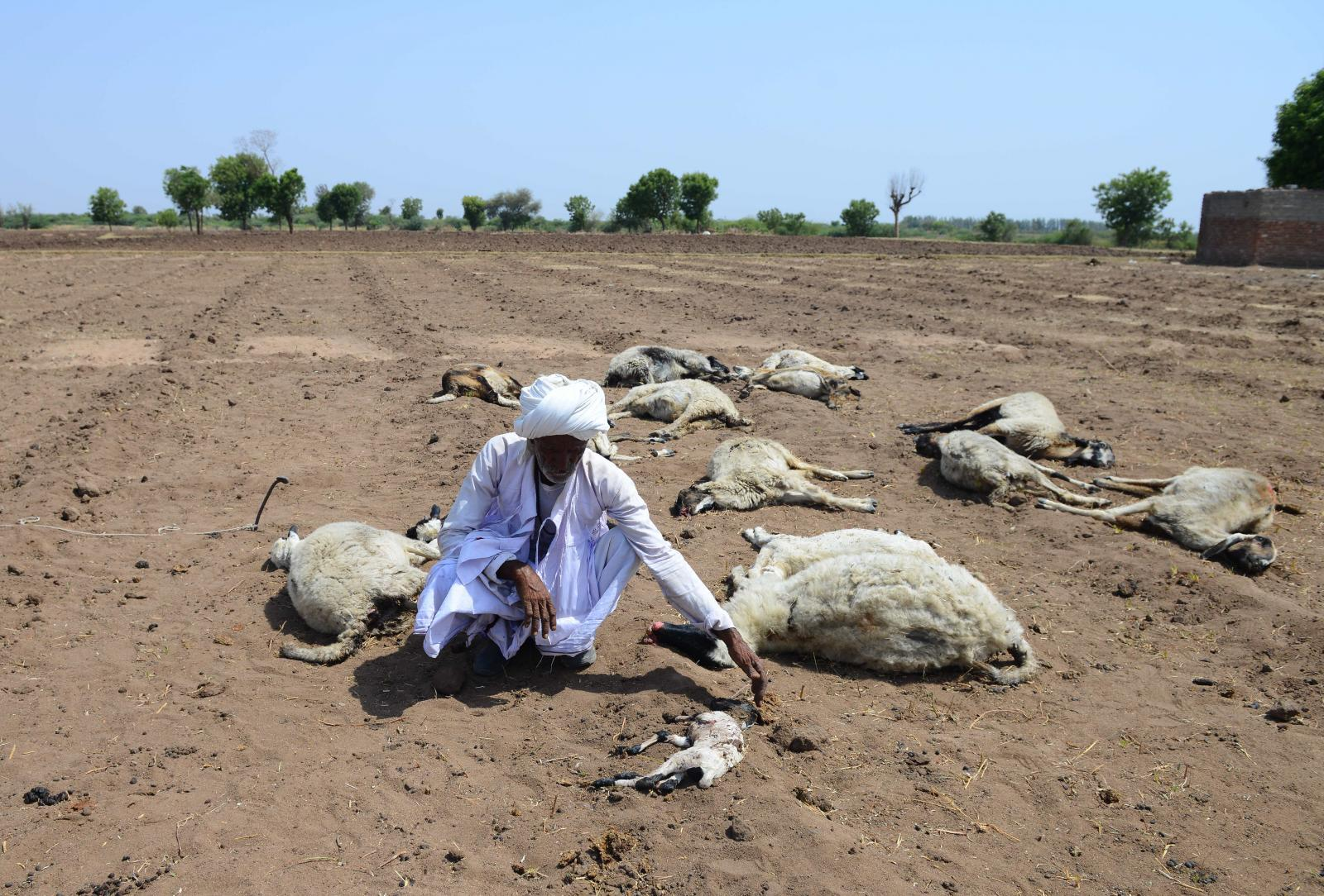 อินเดีย ร้อนจัด อุณหภูมิแตะ 50 องศาเซลเซียส