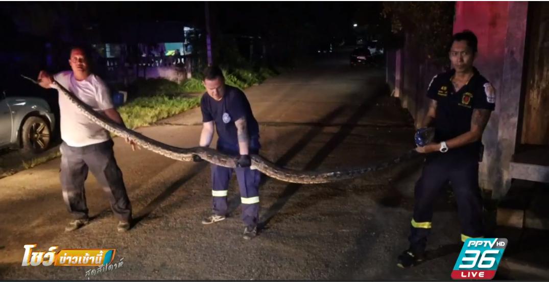 ผวา!! งูเหลือมบุกบ้านกลางดึก