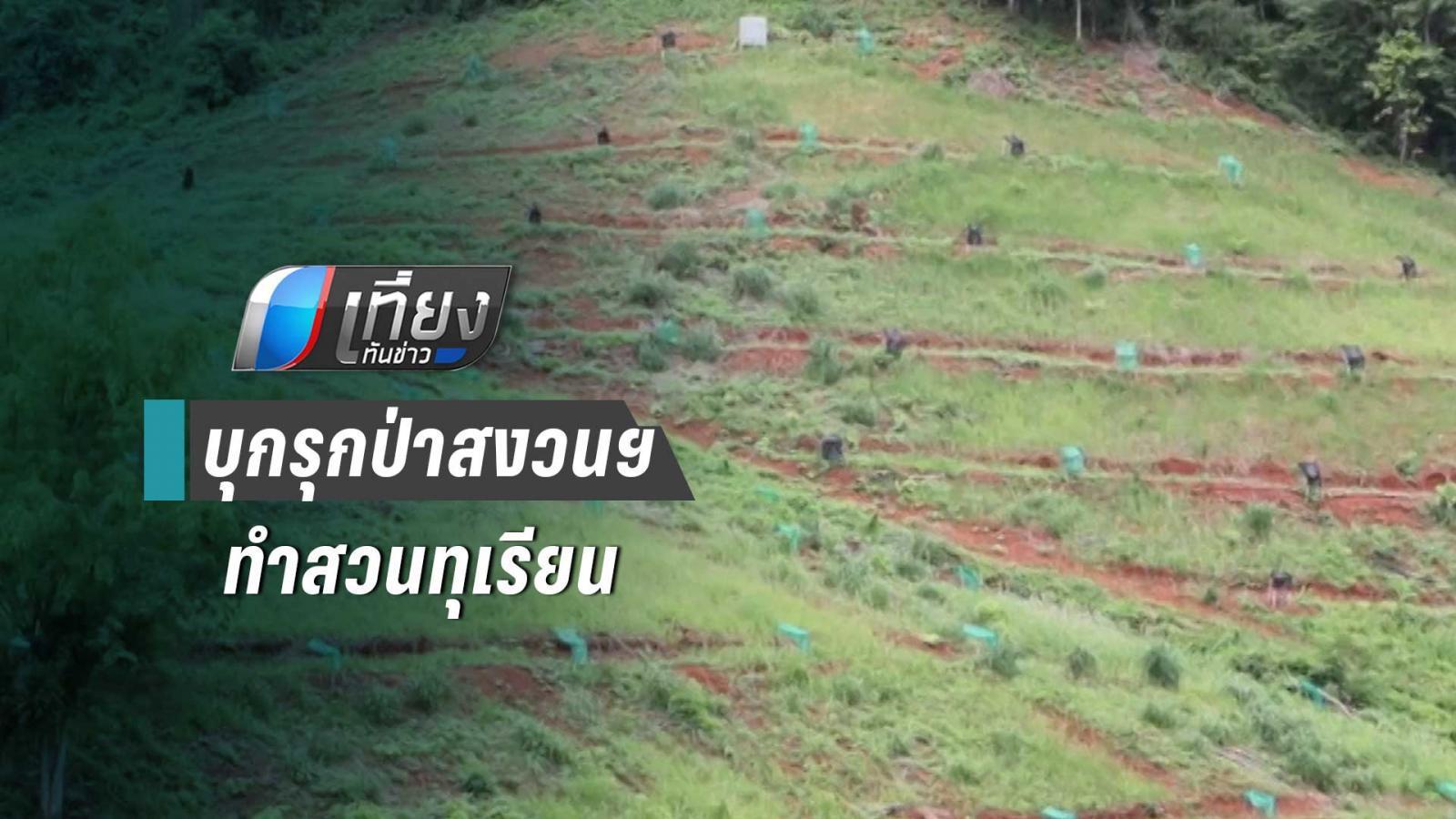กรมป่าไม้ จับนายทุนบุกรุกป่าสงวนแห่งชาติ จ.เพชรบูรณ์ ทำสวนทุเรียน
