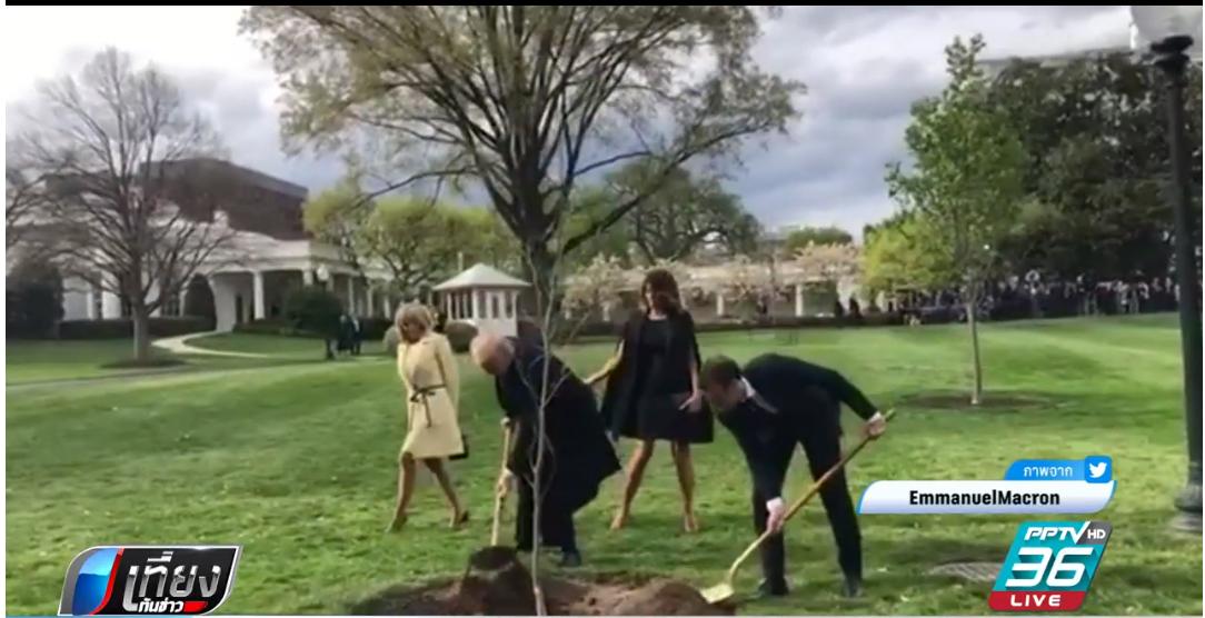 """ต้นโอ๊กที่ """"ทรัมป์ – มาครง"""" ปลูกร่วมกันตายแล้ว"""