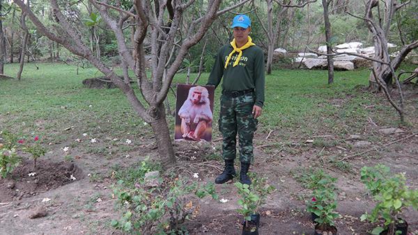 """ไอเดียแจ่ม  แขวนรูป """"ลิงกัง""""  ขู่ """"ลิงแสม"""" ไม่ให้มารื้อต้นไม้"""