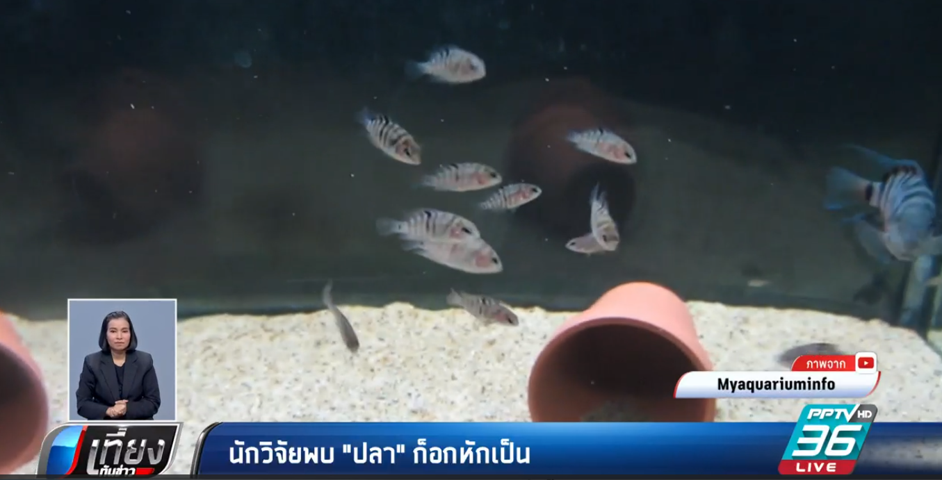 ปลาก็มีหัวใจ!! นักวิจัยพบ