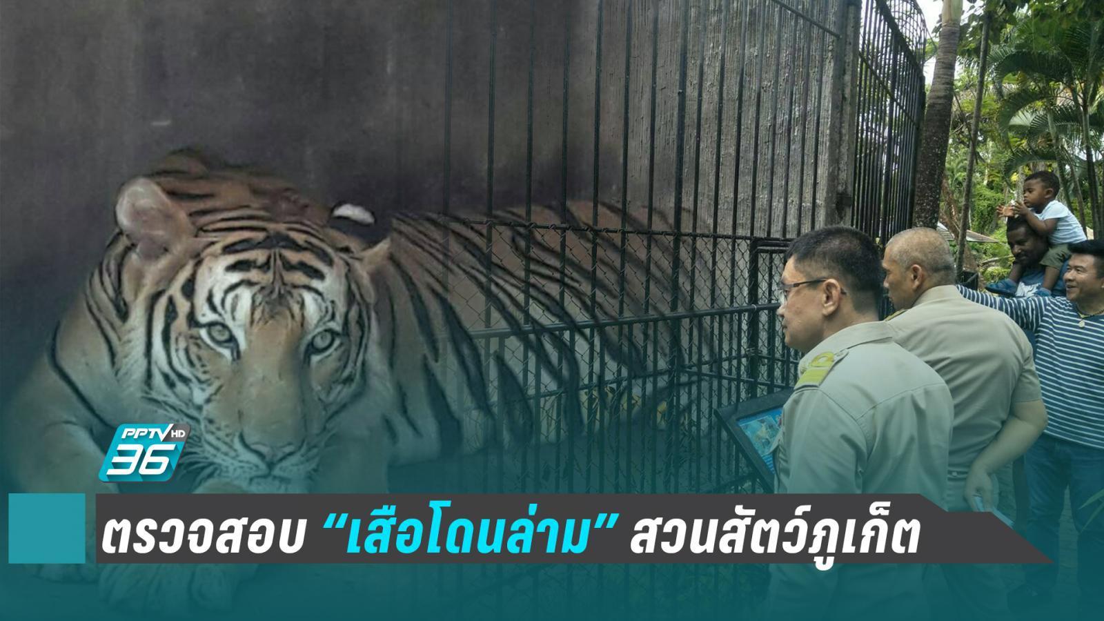 สวนสัตว์ภูเก็ต ปฏิเสธวางยาเสือโคร่ง อ้าง ล่ามโซ่ป้องกันอันตรายระหว่างถ่ายรูปคู่นักท่องเที่ยว