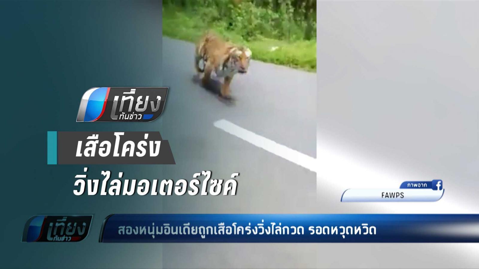 หวุดหวิด !! สองหนุ่มอินเดีย ถูก เสือโคร่ง วิ่งไล่กวด