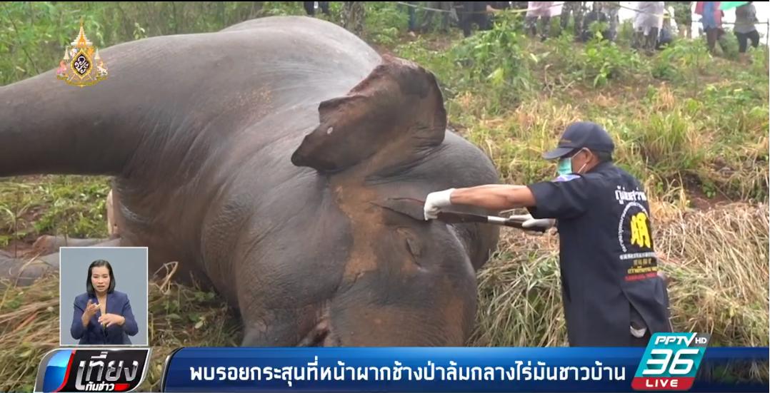 พบรอยกระสุน ในช้างป่าล้มที่ภูหลวง แต่เชื่อการตายเกิดจากไซยาไนต์