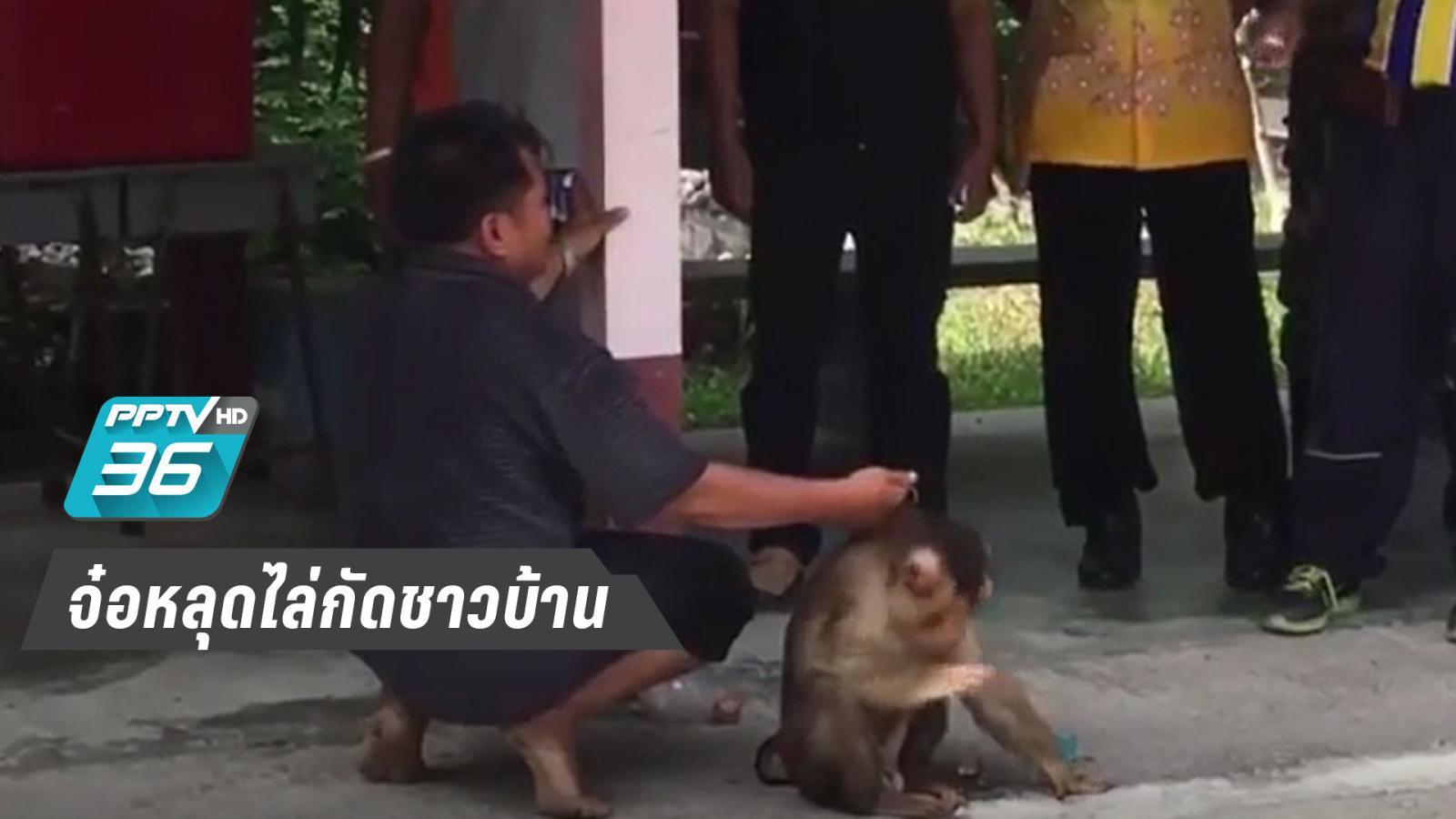 """""""เจ้ายุทธ์""""ลิงกัง หลุดไล่กัดชาวบ้านเจ็บ 1 เจ้าของนำไข่ไก่มาล่อจึงสิ้นฤทธิ์"""