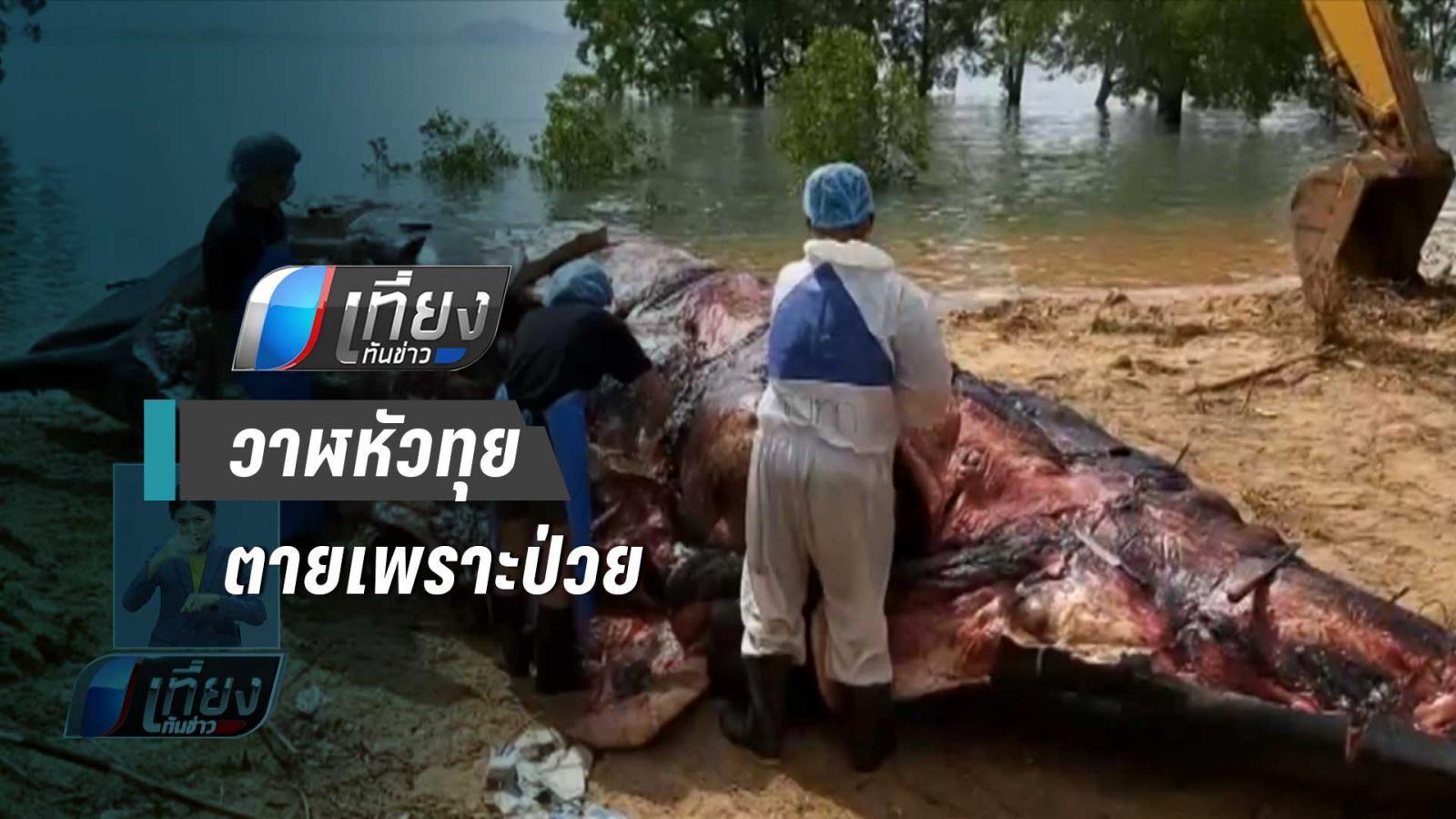 กรมทรัพยากรทางทะเลฯ เผยวาฬหัวทุยตายตามธรรมชาติ